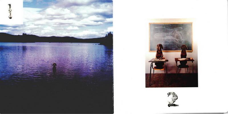 Профессиональные фото от William Wegman